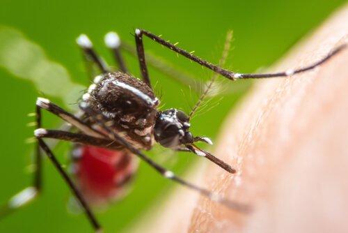 Control Biológico de Insectos Plaga y Vectores de Importancia Sanitaria