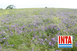 Los cultivos de cobertura y rotaciones favorecen la actividad y la diversidad de la biota del suelo