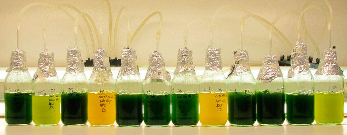 Bioprospección de cepas nativas de microalgas de agua dulce